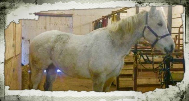 Horse had melanomas