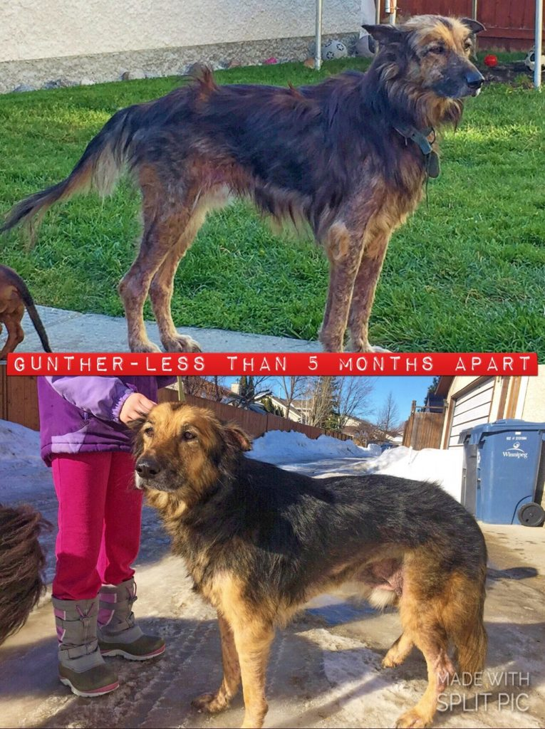 gunther before and after photo
