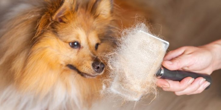 how to stop excessive shedding in dogs