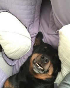 Rotty Happy to be mobile